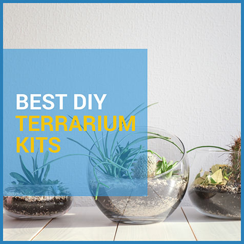 succulent terrarium kit