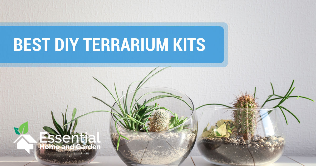 Our Favorite Diy Terrarium Kits Make Your Own Tiny Garden Essential Home And Garden
