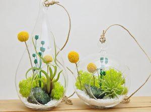 bliss garden twin diy terrarium kit