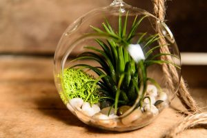 hinterlands trading glass globe terrarium kit