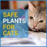 safe flowers for cats