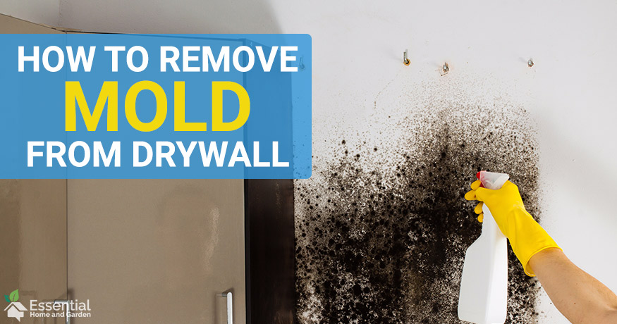 how to remove mold from drywall