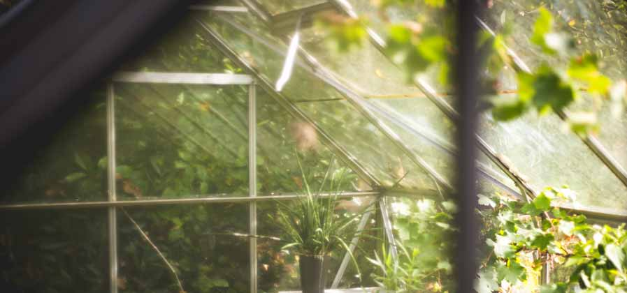 greenhouse light diffusion