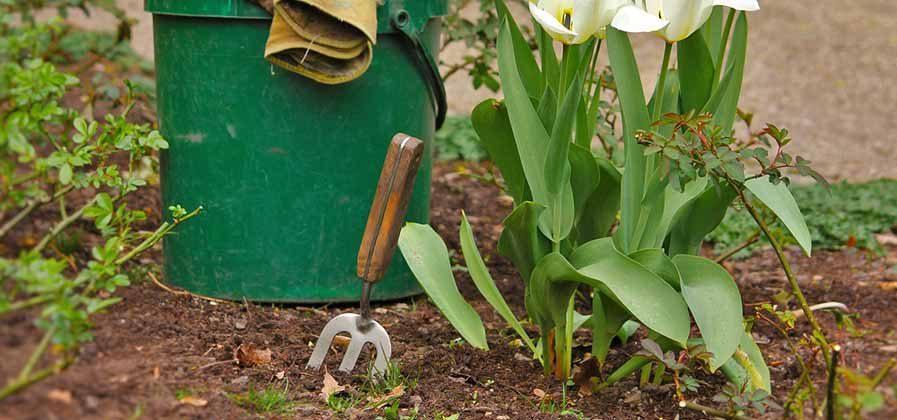 compost mulching