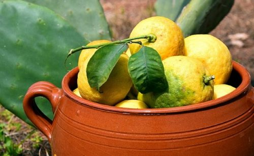 are lemons easy to grow
