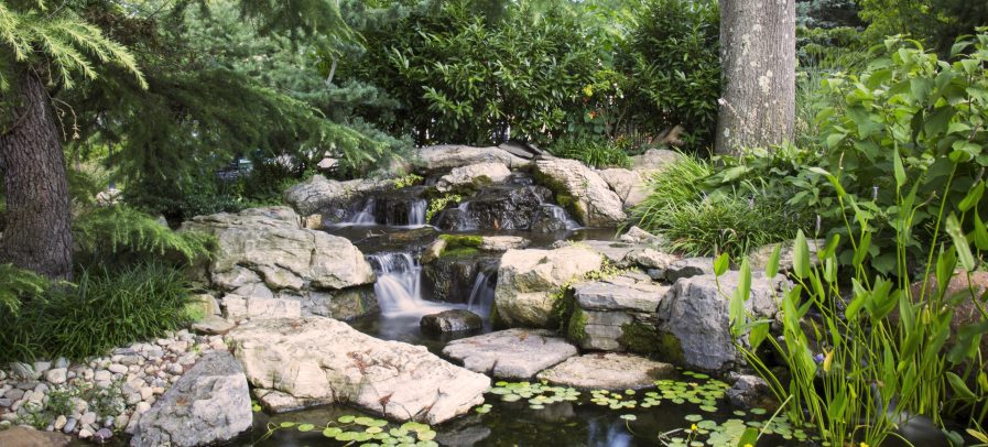 The Ultimate Garden Pond Guide - Essential Home and Garden