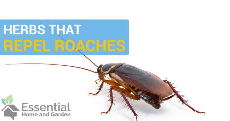 natural roach repellent
