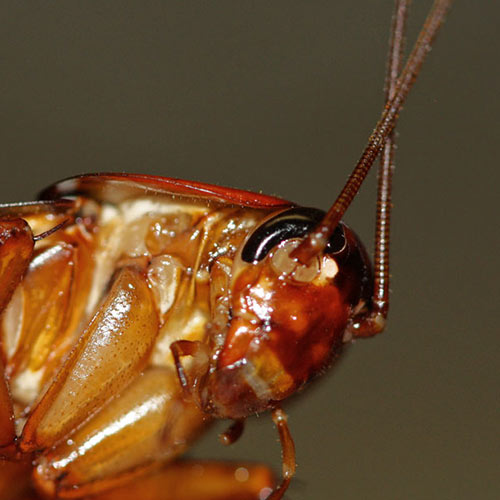 Natural Ways To Repel Roaches