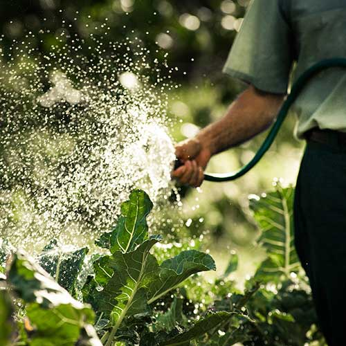 The Best Garden Hose - A Professional Gardner's Picks