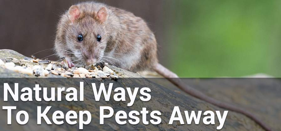 natural ways to keep pests away