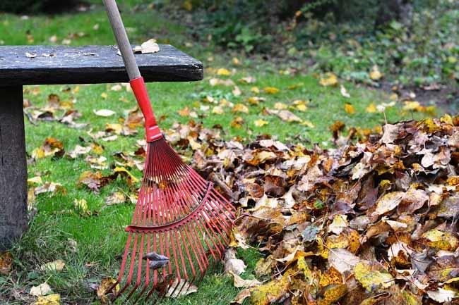 raking up leaves