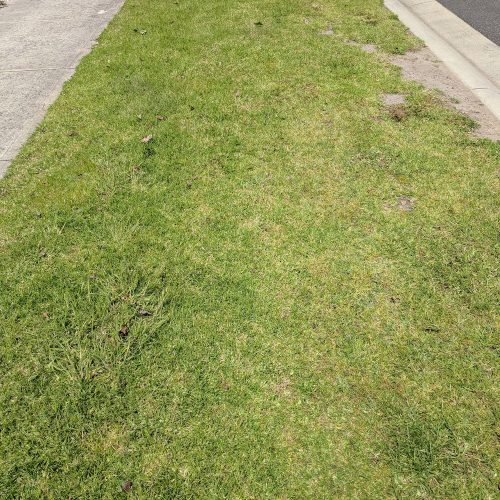 kill weeds in lawn