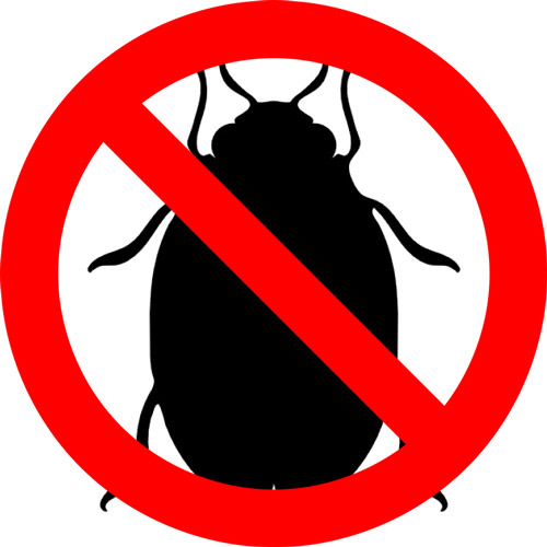 no bedbugs