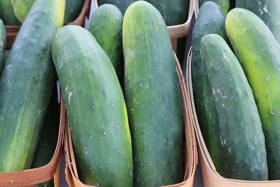 cucumber anti inflammatory