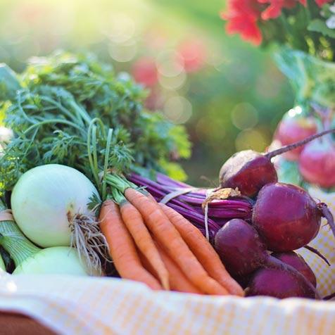 organic gardening guide