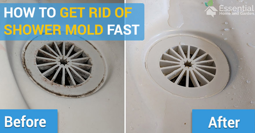mold in shower