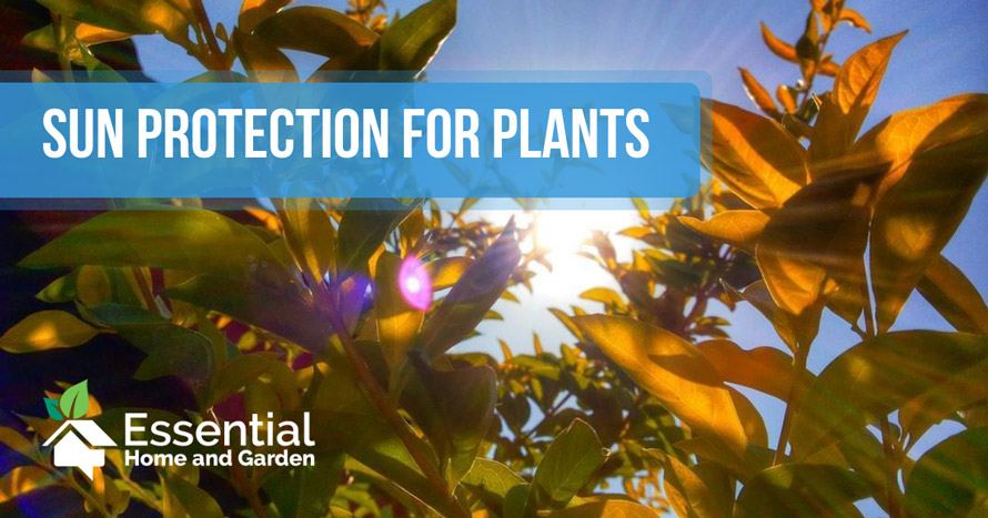 sun protection for plants