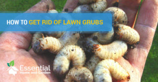 how to get rid of grubs