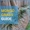 mondo grass featured