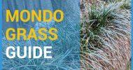 mondo grass featured
