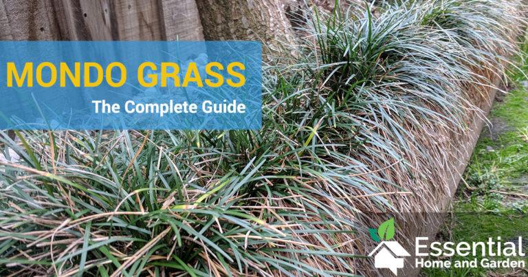 mondo grass guide