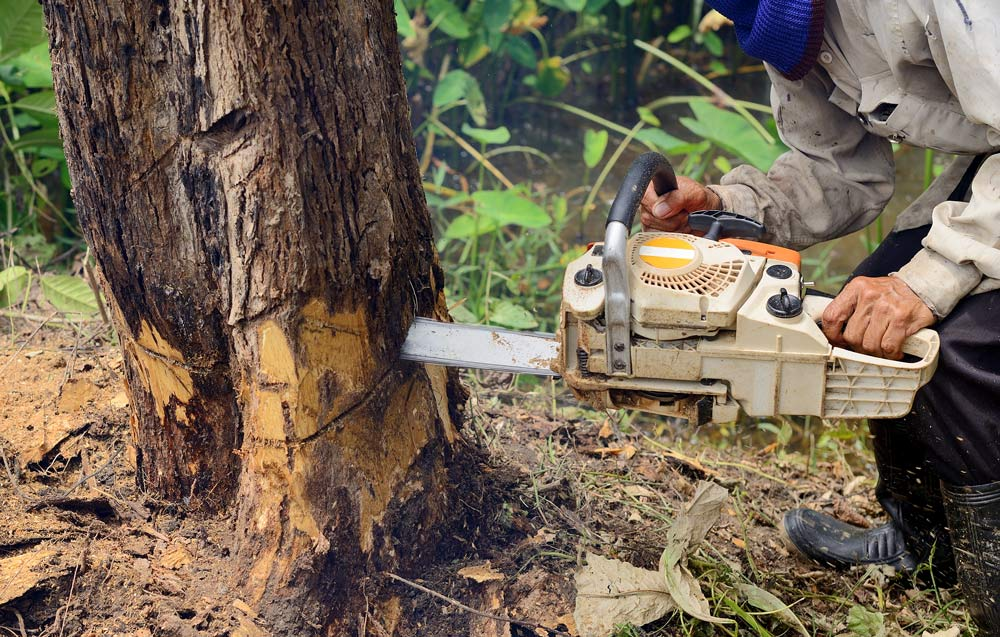 chainsaw cutting down a tree