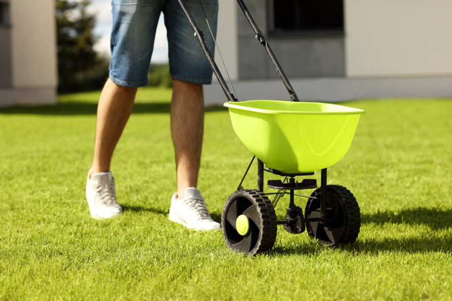 fertilize dead lawn