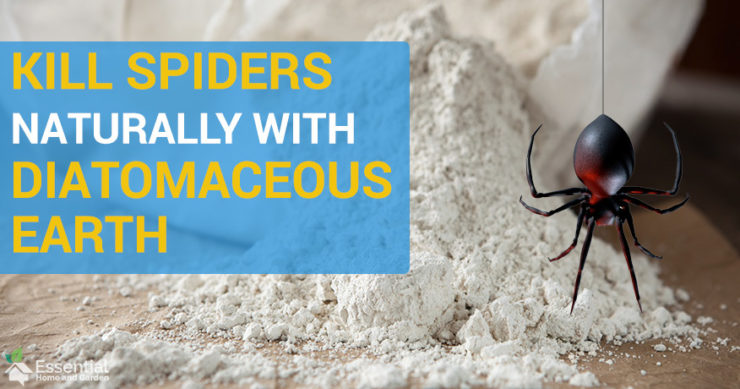 does diatomaceous earth kill spiders