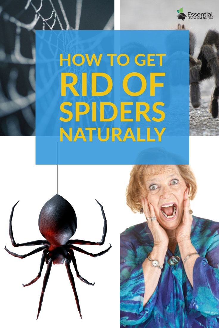 kill spiders naturally