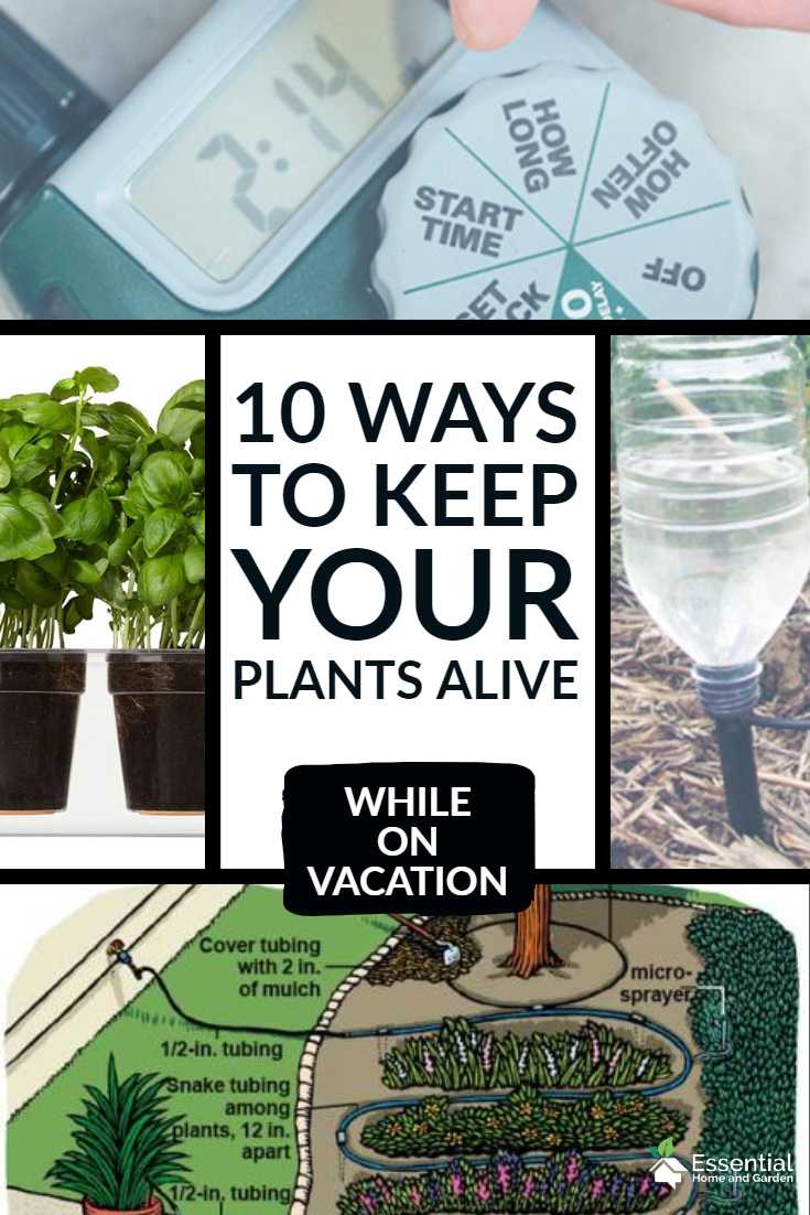 10 Ways to Water Plants While on Vacation - Essential Home and Garden