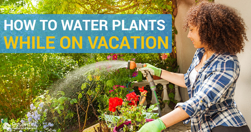 water plants while on vacation