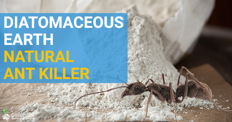 does diatomaceous earth kill ants