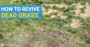 How To Revive Dead Grass