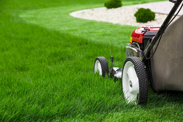 revive dead grass by mowing the lawn