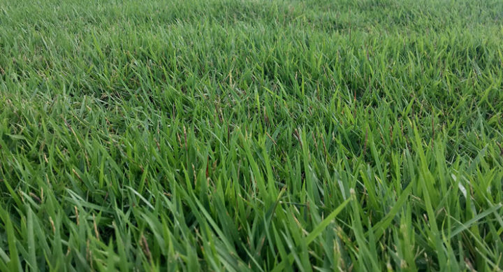 Choosing The Best Grass For Southern California - Essential