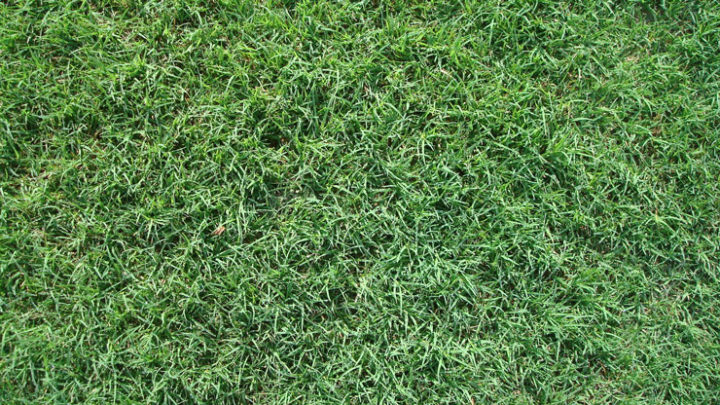 bermuda grass for southern california