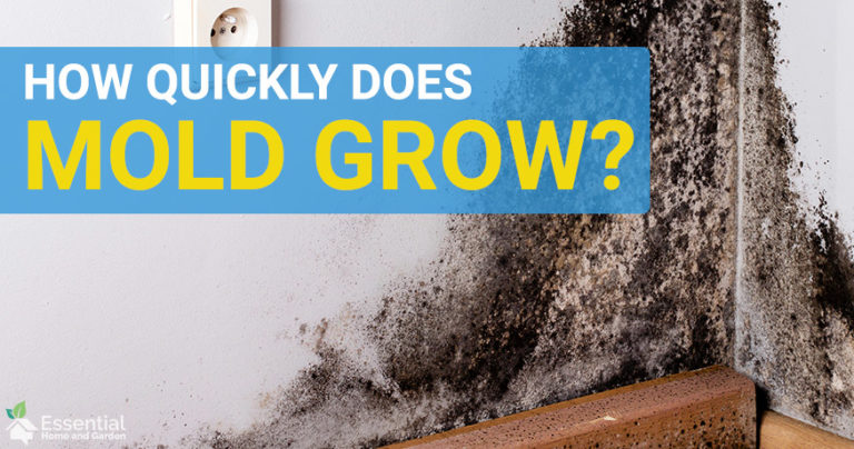 how long does mold take to grow