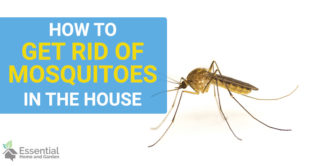 how to get rid of mosquitos in the house