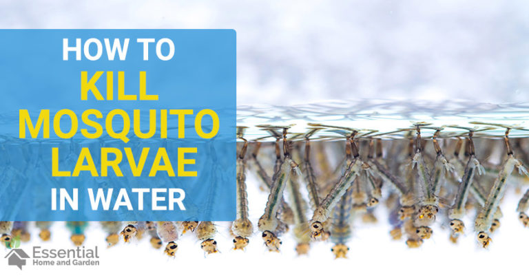 how to kill mosquito larvae in water