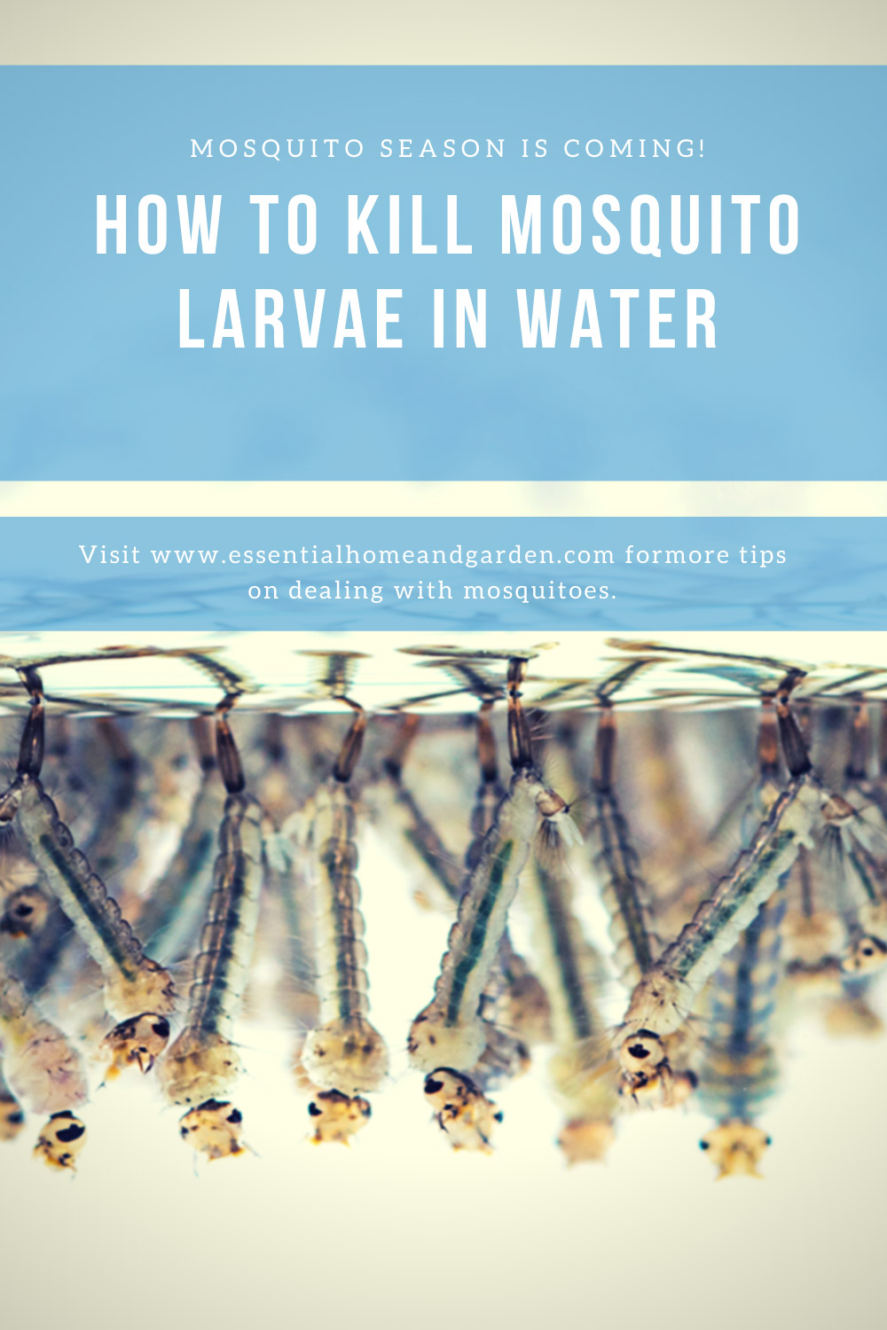 mosquito larvae in water pinterest image