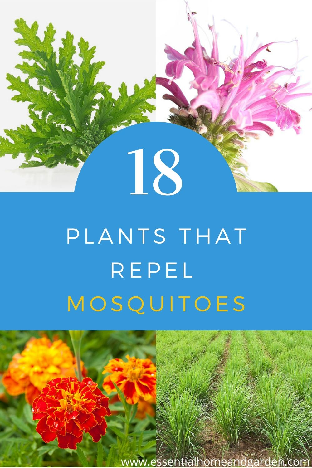 18 plants that repel mosquitoes