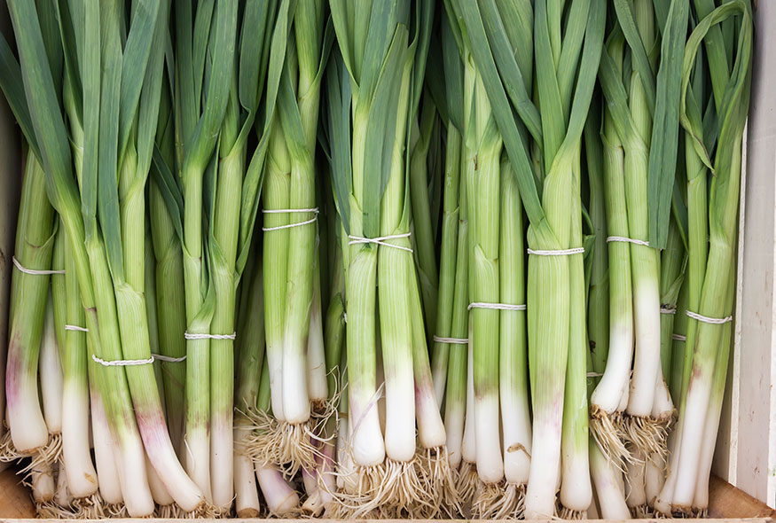 green onion bunch