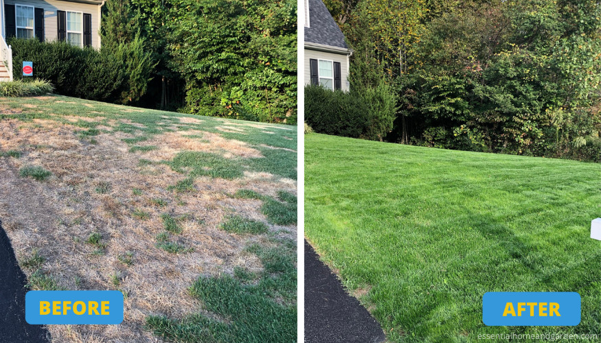 before and after overseeding a lawn