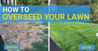 how to overseed your lawn