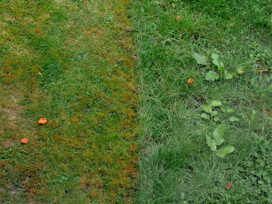 a lawn in poor condition with weeds and bares pots