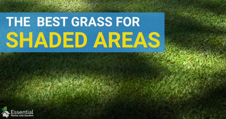 best grass for shaded areas