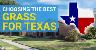 best grass for texas
