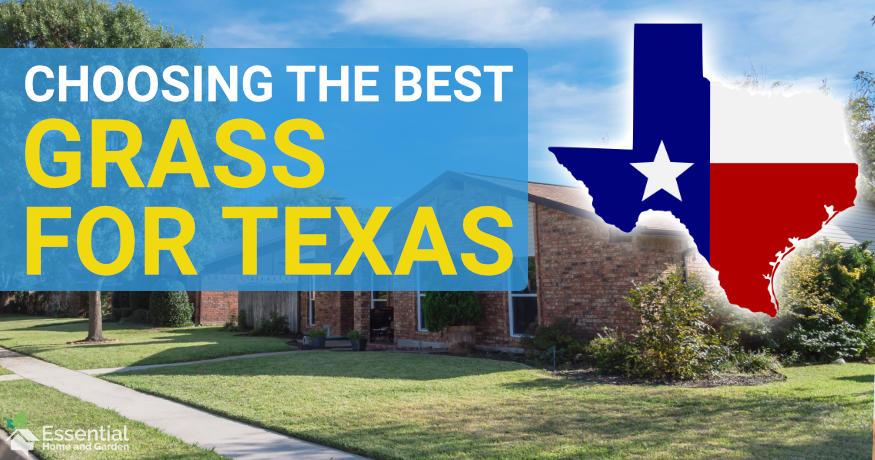 best grass for texas
