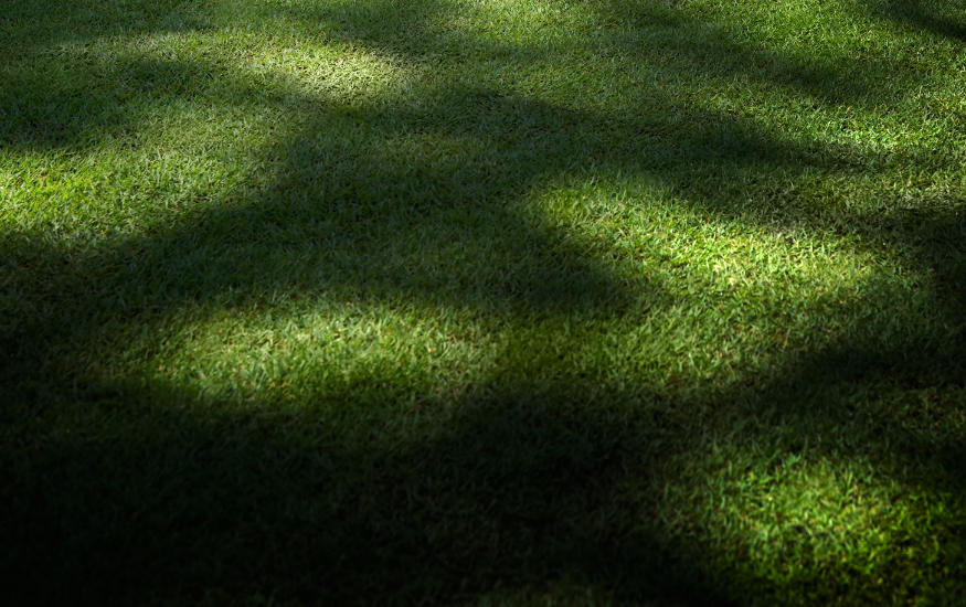 grass in the shade