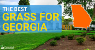 best grass for georgia